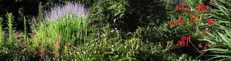 Jardimage HERBE ROUGE