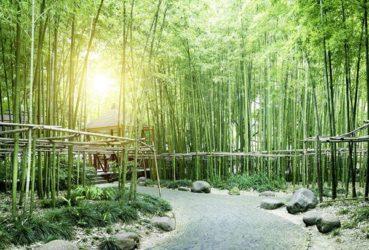 Papier peint bambous