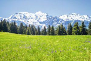 Décoration paysage de montagne