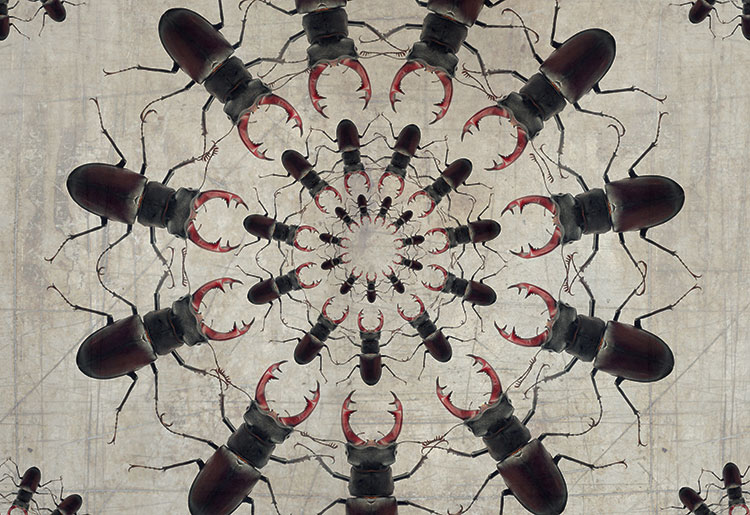 SCARABEES