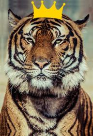 Tigre déco