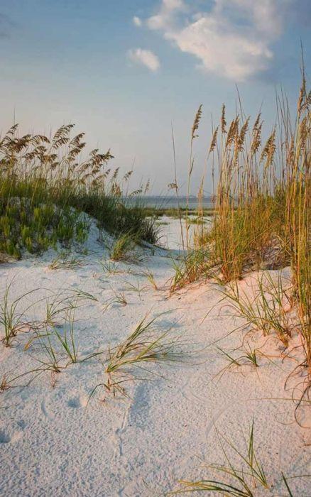 Décoration dunes et plage
