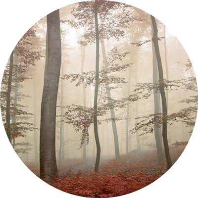 Forêt pourpre