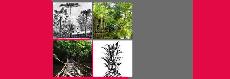 Transformez votre intérieur en jungle