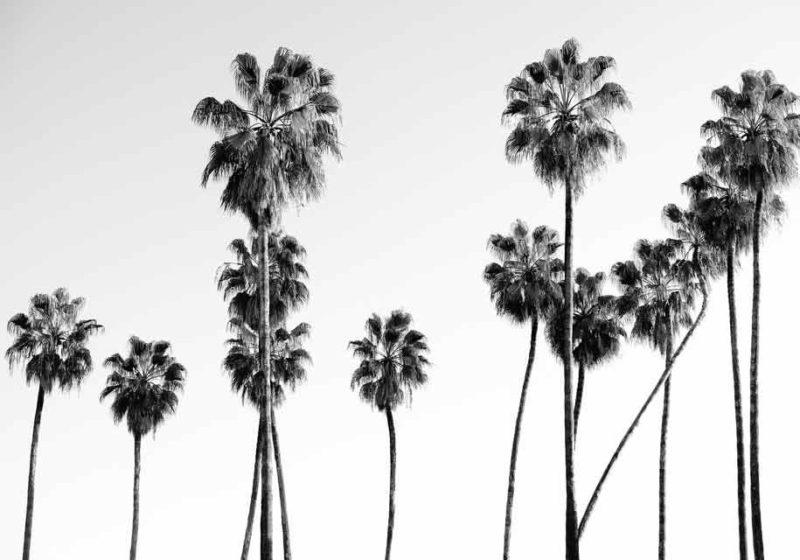 tableau mural palmier noir et blanc